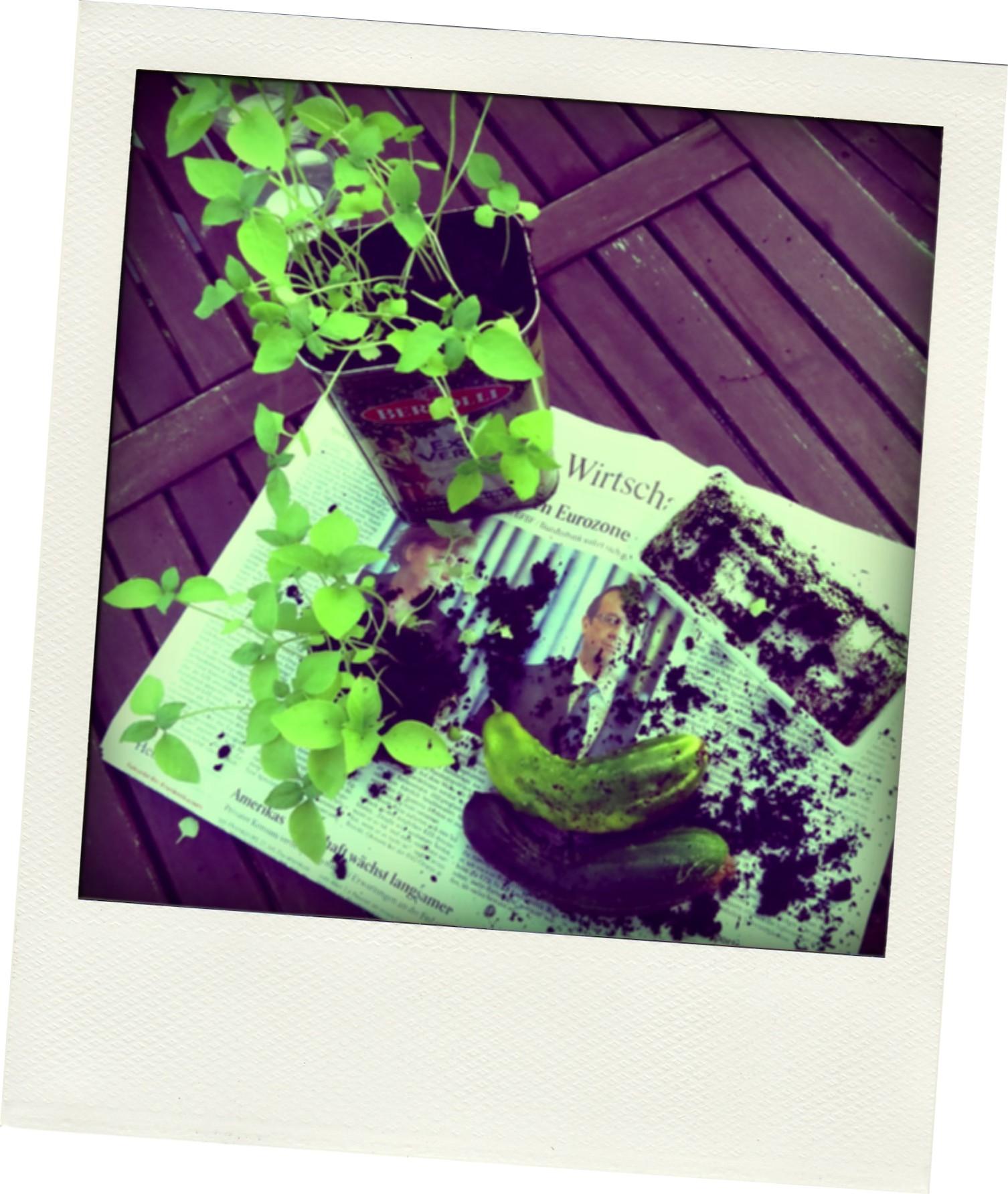 Liebe mitb rger und mitb rgerinnen dietauschlade - Candide il faut cultiver notre jardin ...
