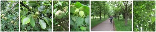 mundraub_grün_bäume