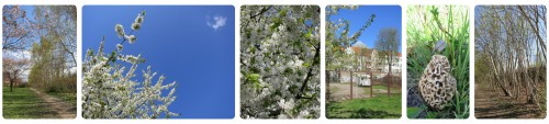 BlütenZeit_grün