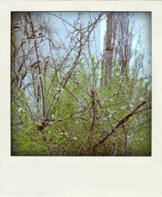 spatzenundblütenundschuheimbaum