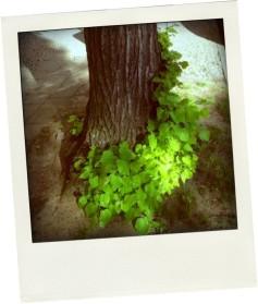 BlätterBoa