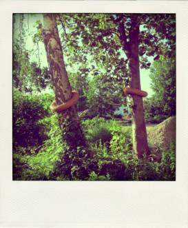 Baum_Ringe