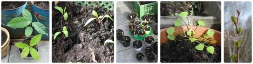 frühlingspflanzen2016_erstesGrün
