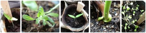 frühlingspflanzen2016_frühjahr
