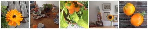 augustFreuden_orange