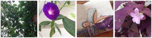 septemberfreuden_violett